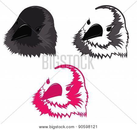 The Bird's Head