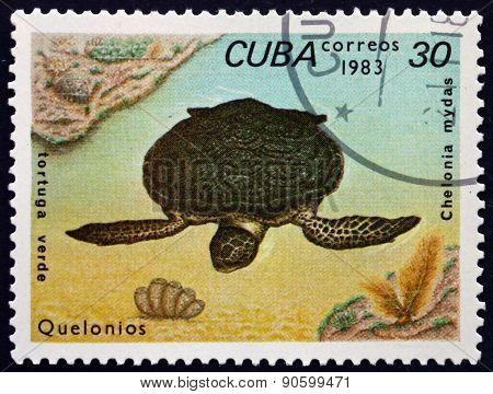 Postage Stamp Cuba 1983 Green Sea Turtle