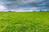 image of grassland  - Green springtime meadow landscape with cloudy storm sky - JPG
