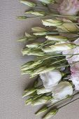 foto of crude  - close up of a bunch of fresh pink and white eustoma flower lying on gray crude sack cloth - JPG