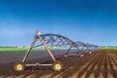 pic of sprinkler  - Automated Farming Irrigation Sprinklers System in Operation on Cultivated Agricultural Field on a Bright Sunny Summer Day - JPG