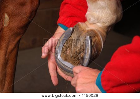 Horse Shoe Best Cleaning
