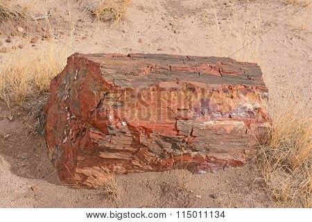 Petrified Log In The Desert