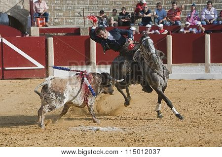Alvaro Montes bullfighter on horseback fixing flags to the bull, Ubeda, Jaen, Spain, 29 september 20