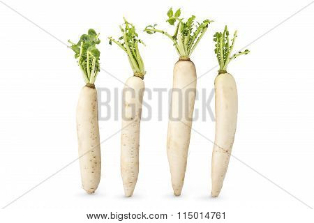 Fresh organic daikon radishes