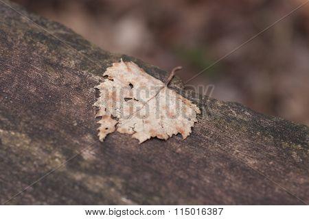 Lung Leaf Life