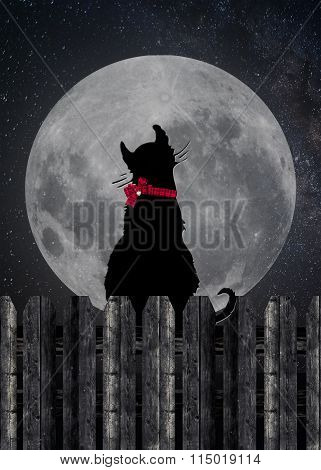 black cat on a fence with moon