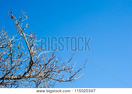 Bare Tree Branches And Twigs On Clear Blue Sky