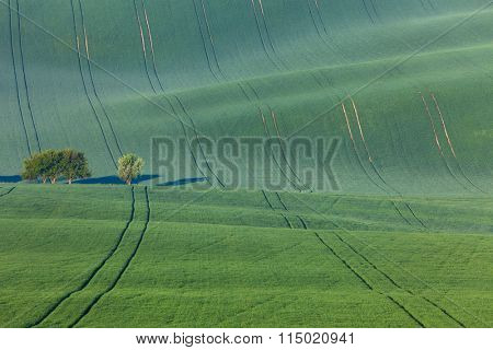 Amazing waves of hills and green and blossom trees - green landscape for backgrounds or wallpapers