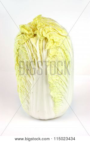 single Chinese cabbage on white background, vertical composition