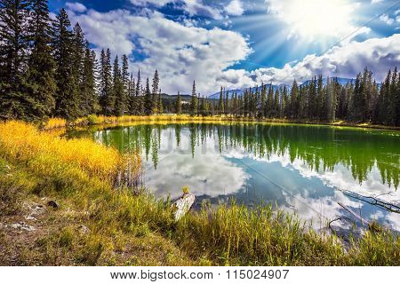 The small superficial lake is surrounded with coniferous forest. Sunny autumn day in Jasper National Park  in Canada