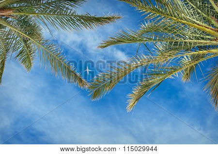 Plane In The Sky Between The Leaves Of Palm Trees