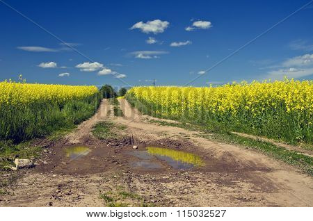 Way With Puddles Through Flowering Rapeseed Field