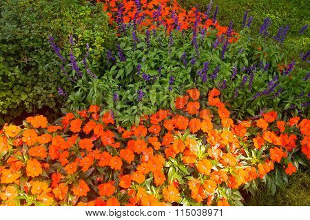 Sunlight On Flower Beds