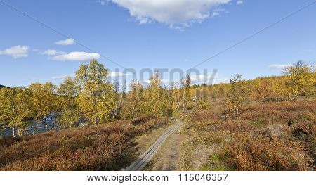 Colorful autumn, fall trees and leaves in the mountain forest, footbridge.
