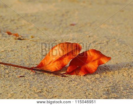 Dry Leaf on the sand