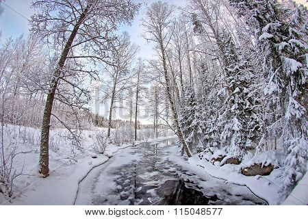 Frozen Stream In Forest
