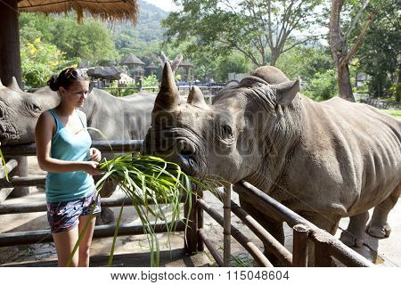 Woman feeding the rhinoceros  at zoo