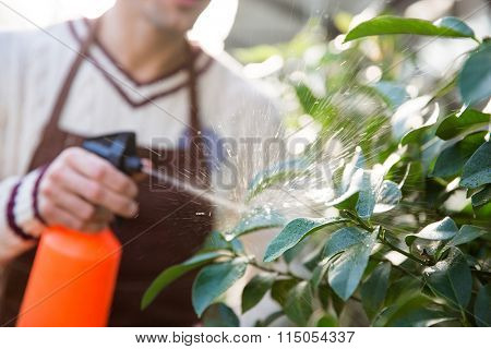 Closeup of man gardener in brown apron spraying plants using water pulverizer in garden center
