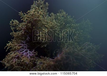 Abstract Floral Background Selaginella Willdenowii (led Lighting)