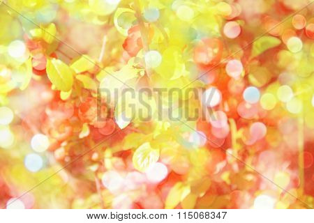 Spring Background With Red Flowers Of Barberry