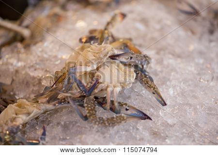 Fresh Blue Crab Or Horse Crab On Ice In The Market