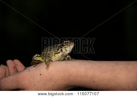 Frog on an arm