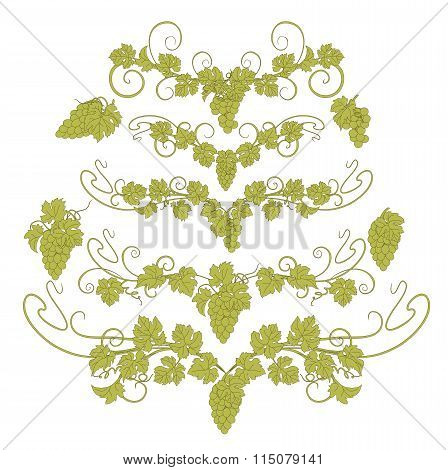 Vector design elements in vintage style with vines.