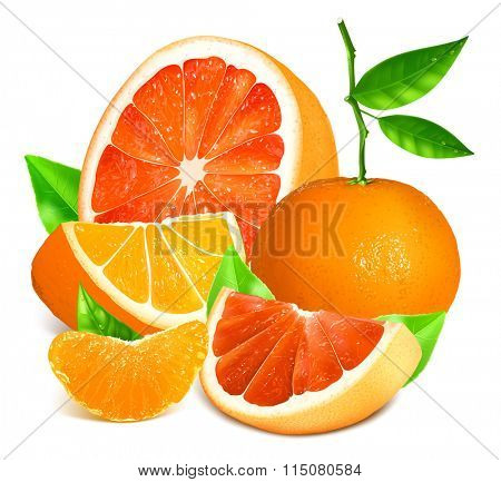 Fresh citrus fruits.  Fully editable handmade mesh. Vector illustration.