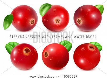 Ripe red cranberries with leaves. Fully editable handmade mesh. Vector illustration