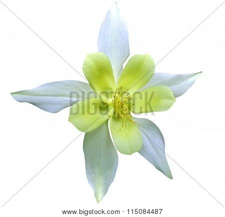 Lily With Clipping Path