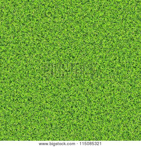 Green Grass Background Texture