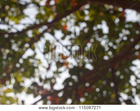 Blur Light In Jungle Background