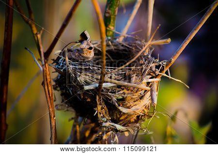 Abandoned Birds Nest