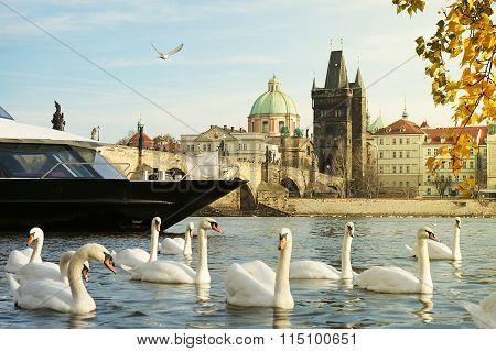 Cruise On Vltava River In Prague