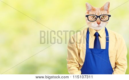Ginger cat worker.
