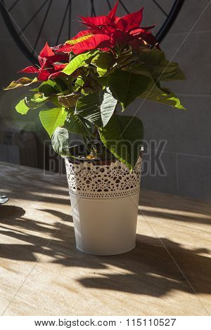 Flowers In Flowerpot With Flare Effect