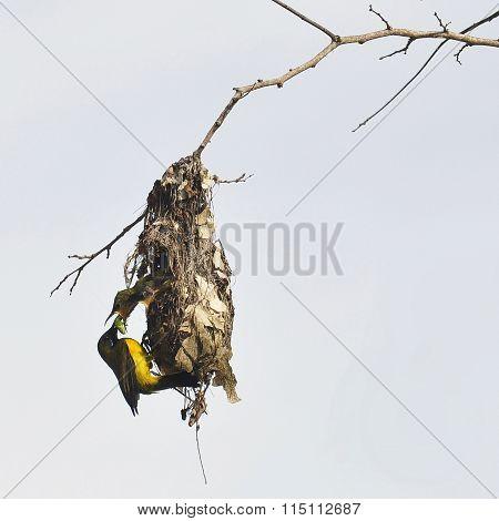 Sunbirds Life