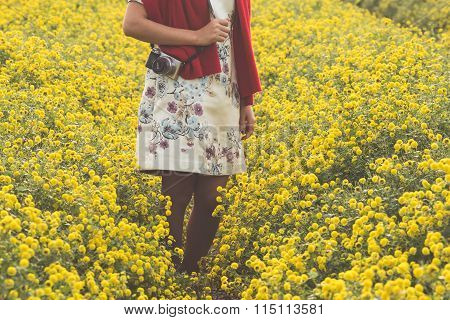 Young girl in yellow daisy field in Hung Yen, VIetnam