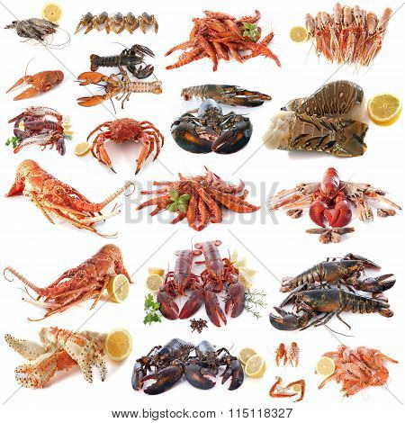 Seafood And Shellfish