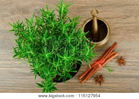 Fresh Tarragon Spice Isolated on Wood.