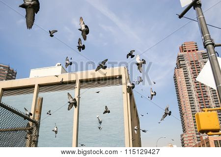 Pigeons Flying In Manhattan