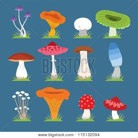 Mushrooms vector illustration set. Different types of mushrooms isolated on blue background. Nature mushrooms for cook food and poisonous mushrooms flat style