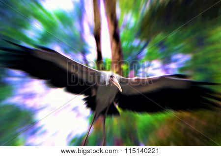 Yellow Billed Stork Bird Flying In The Forest