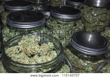 Marijuana Jars in Rows with Lid Off Showing Buds