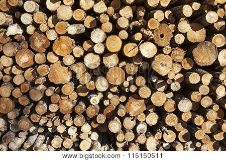 Firewood stack. Staple of biomass, arranged firewood. Stacked wood pine timber for construction buildings