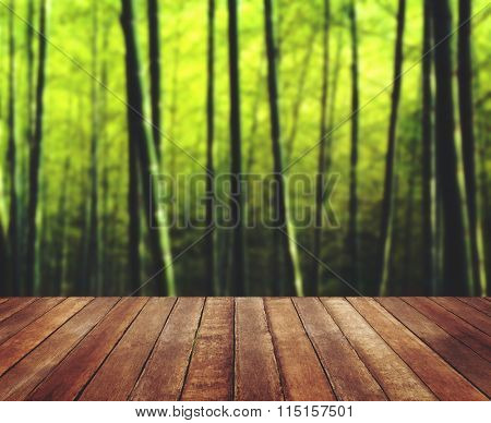 Bamboo Forest Nature Plant Wooden Floor Tree Concept