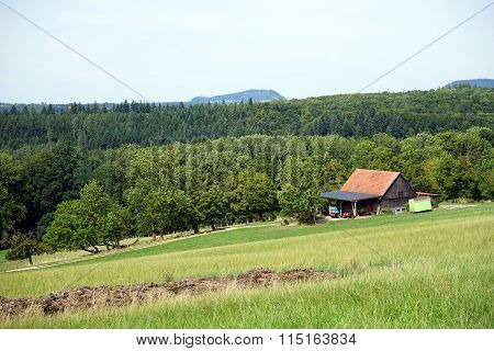 Shed And Forest