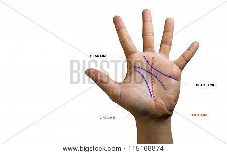 Line On Hand.the Predict The Fate Of Palmistry.