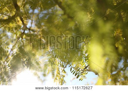 Fern Tree in Sunlight on Spring Morning